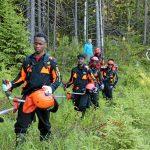 Flyktingar arbetar i skog
